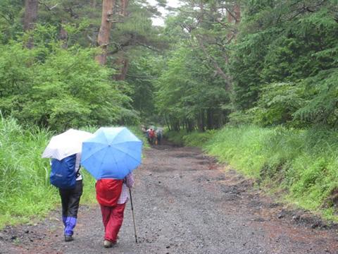 雨にぬれた美しい緑の中を歩く