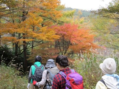 紅葉とすすきが印象的な箱根路山行