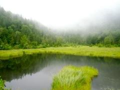 神秘的な湿原