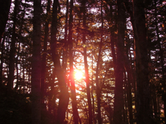 南御室小屋を出て木々の間からご来光